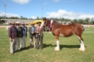 Gatton Clydesdale & Heavy Horse Field Days 2011