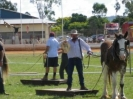gatton_heavey_horse_field_days_2